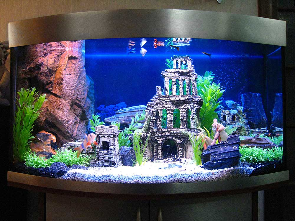 Дизайн аквариумов фото своими руками